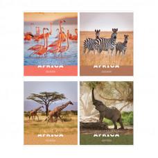 "Тетрадь А5 48 л.кл ArtSpace ""Животные. Nature of Africa"""""